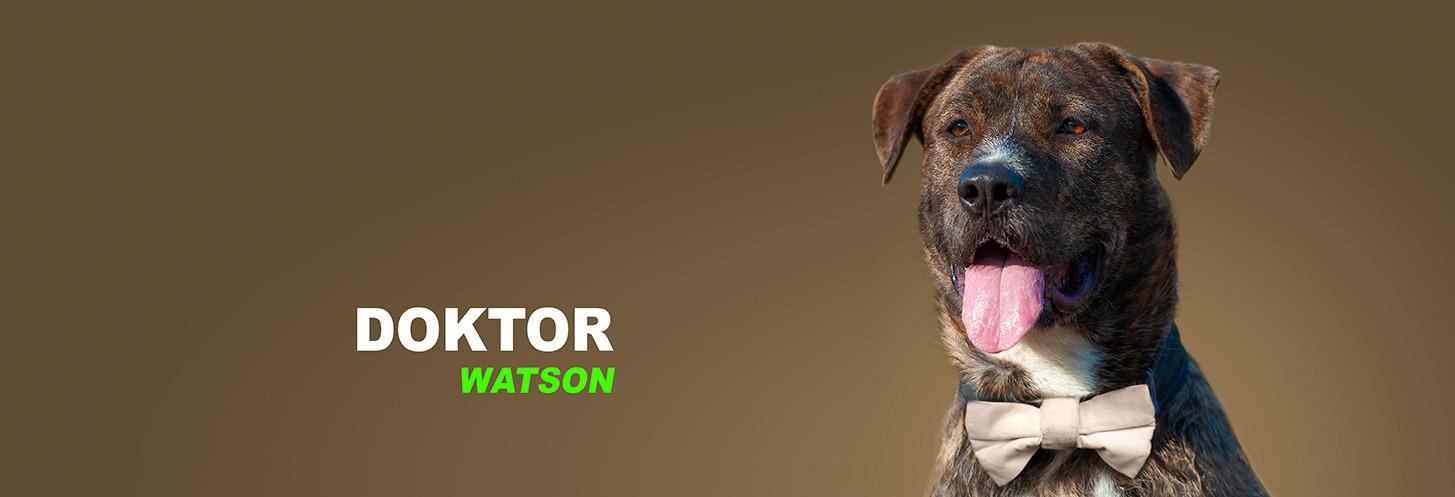 Dr. Watson, Hund, Portrait, Boxer, Schäferhund, Pitbull, staffordshire, Mitarbeiterportraits, Mitarbeiterfotos