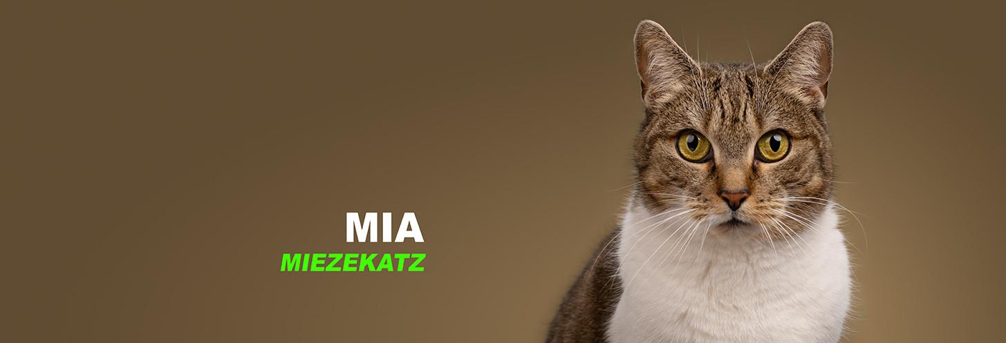 Mia, Katze, Mitarbeiterfotos, Mitarbeiterportraits, Portrait