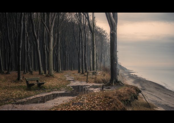 landschaftsbild poster wald meer taurig geisterwald märchen