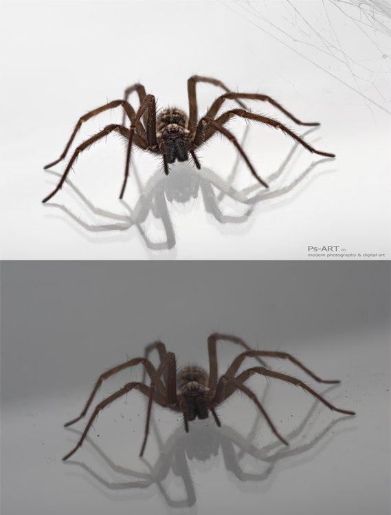 spinne-bildbearbeitung-insekten